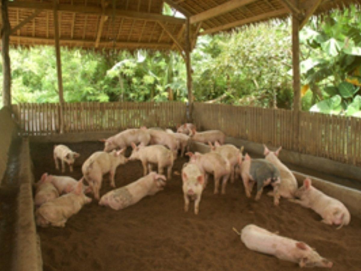How To Start A Hog Raising Business