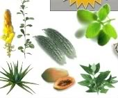 approved philippine herbal medicines