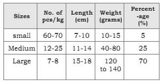 sizes of prawn
