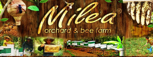Beekeeping industry shows potential to thrive with Milea's health care products with natural healing abilities 4