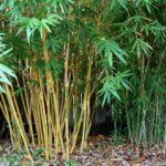 Bamboo Production Guide