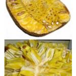Jackfruit Production Guide