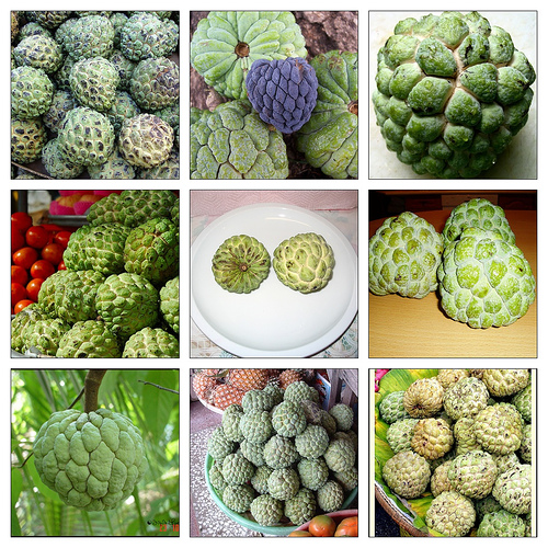 Sugar Apple Production Guide 9