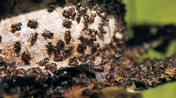 Making apiculture industry sustainable through stingless bees 1