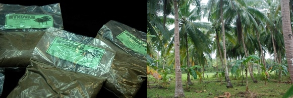 Mykovam: Effective growth enhancer for coconut 3