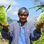 A CPAR vegetable farmer in Ifugao proves there is money in organic
