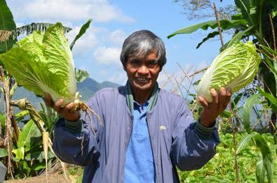 A CPAR vegetable farmer in Ifugao proves there is money in organic 7