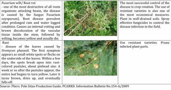 pole sitaw 3 Pest Management