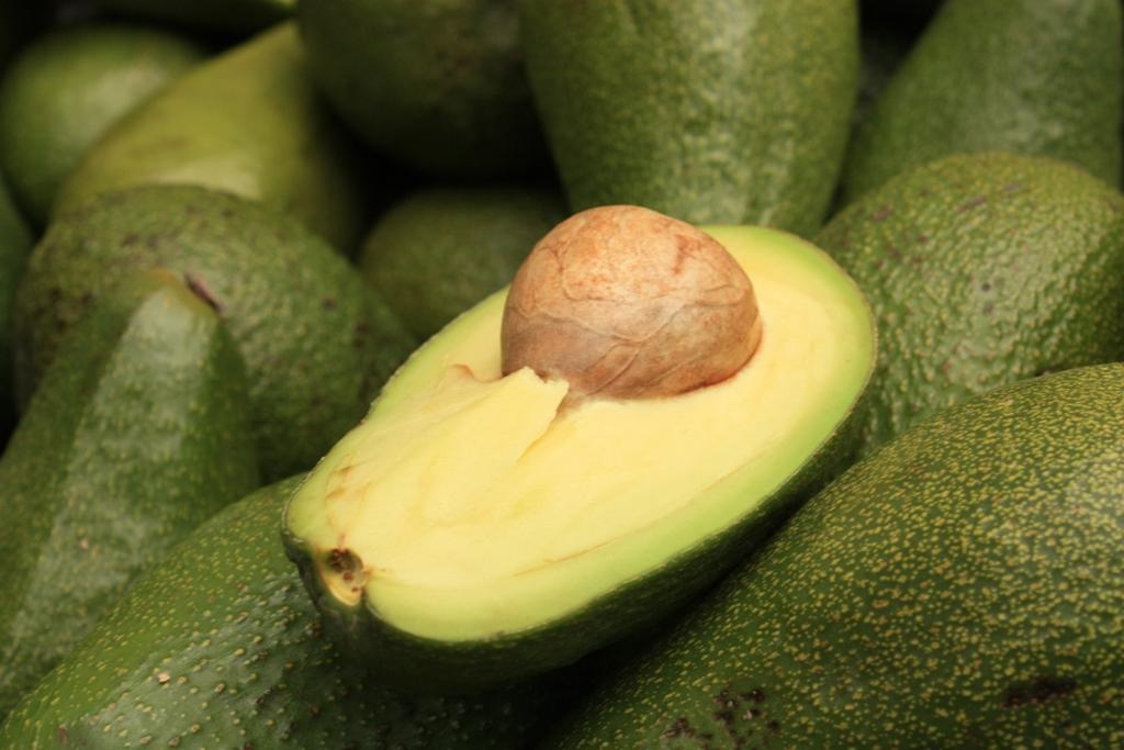 Asexual propagation grafting avocado
