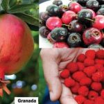 Promoting the less-known, phytochemical-rich Pinoy fruits