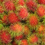 Rambutan: The exotic fruit of Southeast Asia