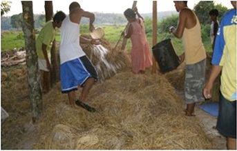 rice straw fertilizer