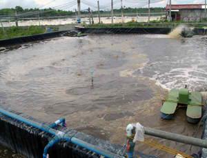 biofloc technology shrimp farms