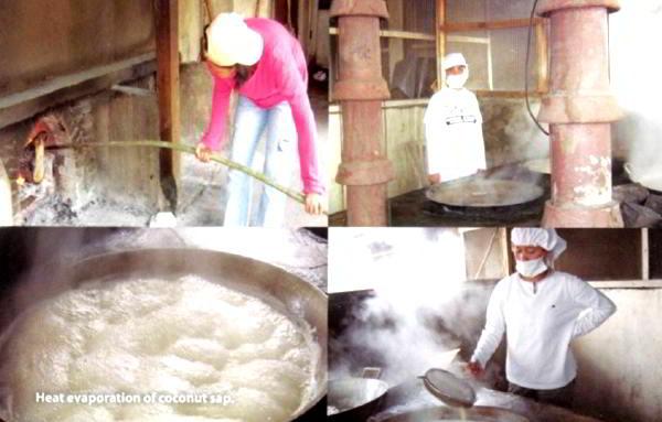 Coconut Sap Sugar Production 2