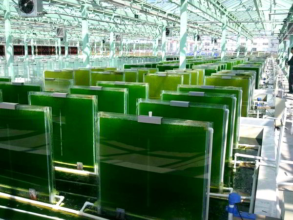 Big plans underway for a Philippine microalgae industry 1