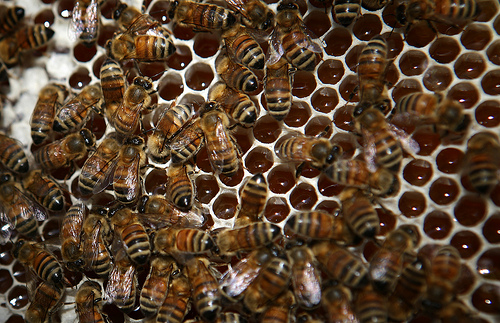 How to Start a Honey Bee and Honey Production Business 1