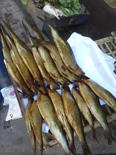 smoked fish photo
