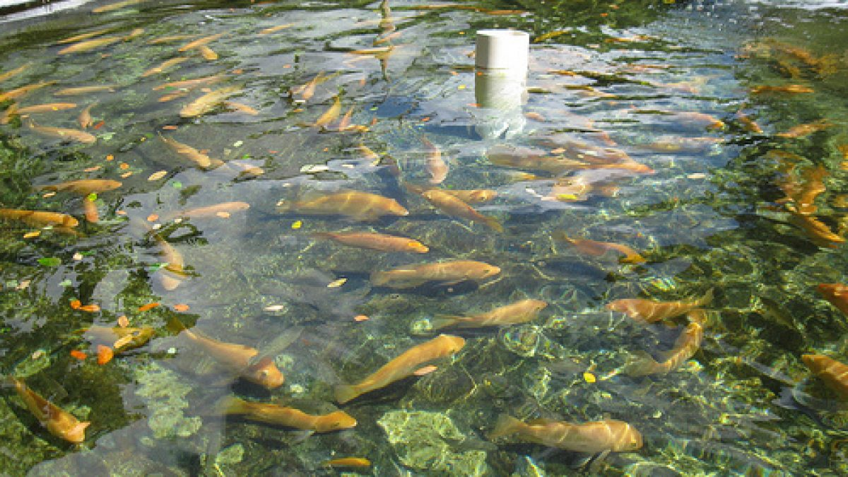 Download Backyard Fishpond Philippines Pics - HomeLooker