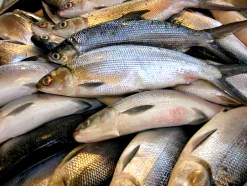 Canning Procedures for Milkfish 1