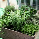 Market niche for Philippine culinary herbs explored