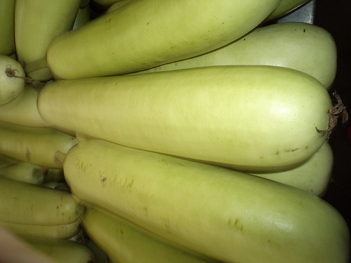 bottle gourd photo