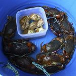 How to Start a Mud Crab Farming Business