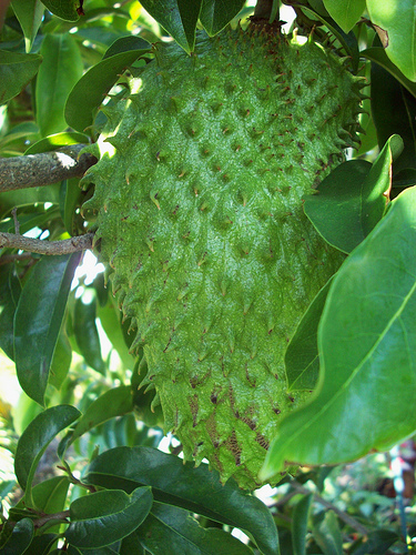 Image result for guyabano fruits