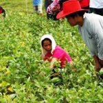Group of women farmers in Zamboanga del Sur benefits from Soybean R&D