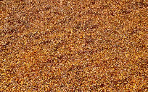 sawdust photo