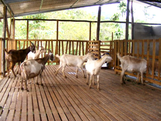 Low Cost Goat Housing Business Diary Ph