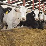Low Cost Feeds and Feeding Methods for Livestock
