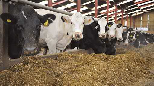 Low Cost Feeds and Feeding Methods for Livestock 1