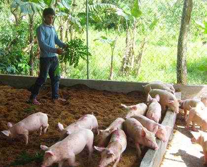 piggery project proposal for acankwete piggery Piggery project uploaded by dennis misao project proposal for pig rearing as an income generating source for lighthouse school infrastructure needed: the campus of the lighthouse school has adequate land available within it to start the project.