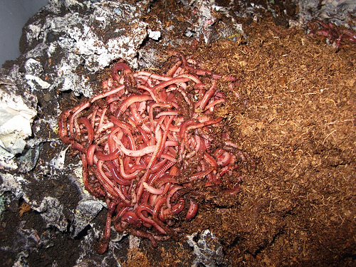 vermicomposting photo
