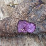 Value Added Products from Ube (Purple Yam) 1