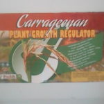 Carrageenan boosts rice production