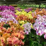 Growing Orchids for Business