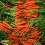 Carrot Production Guide 1