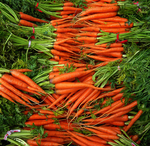 carrot production