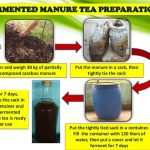 How to Make Tea Manure (Organic Fertilizer)