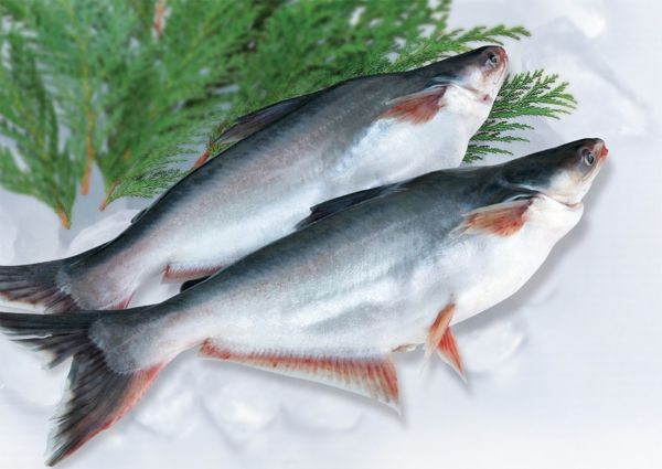 Pangasius Farming and Production Guide 1