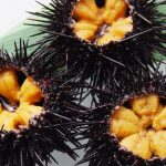 Make profits from sea urchin culture 13