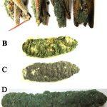 Metarhizium: the mighty fungus