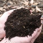 'Instant' compost from scratch