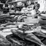 Increasing profit from bangus through processing technologies