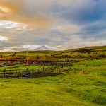 farm tourism brown wooden fence on green grass field under blue sky during daytime